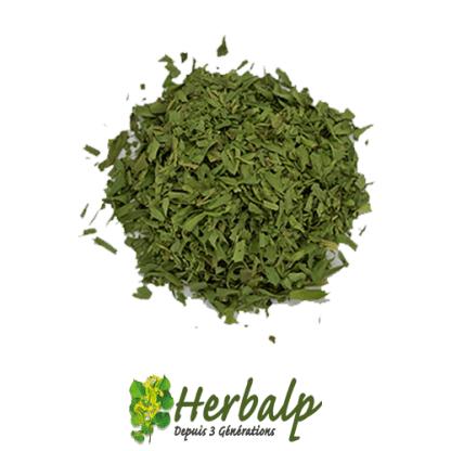 Estragon-herbalp