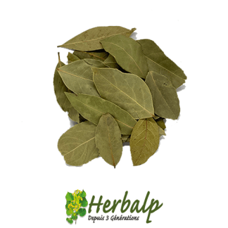 Laurier-feuille-herbalp