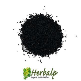 Nigelle-graines-herbalp