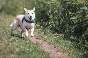 dog-644111_640