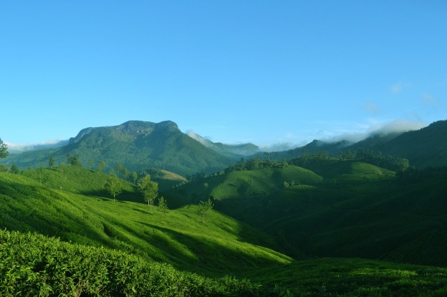 Munnar, Kerala, India. Photo credit: Ginu C Plathottam.