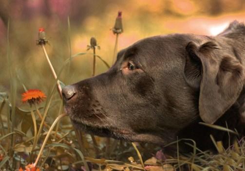 Dog smelling flower.