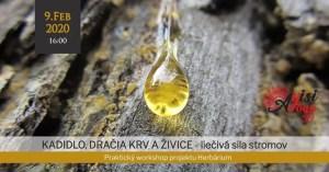 Kadidlo, dračia krv a živice - liečivá sila stromov - Bratislava @ Ayisi Yoga | Bratislava | Slovakia