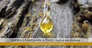 Prednáška o liečivej sile stromov na Festivale Radosti a Života @ Pasohlavky Autocamping Merkur | Pasohlávky | Czech Republic