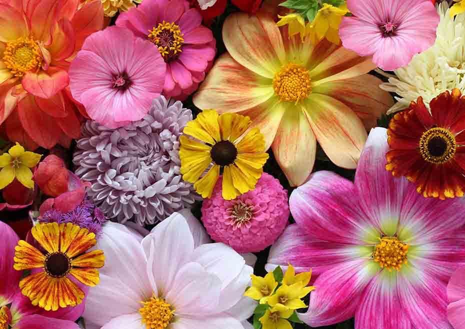 tanaman bunga - herbatani