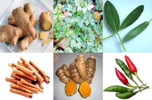 tanaman herbal untuk meningkatkan imunitas