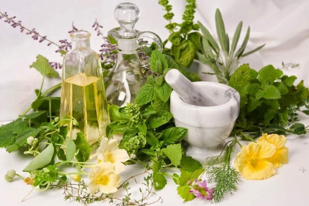 cara budidaya tanaman herbal