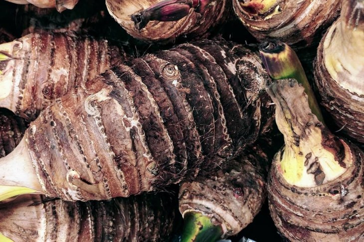Impressive Health Benefits of Taro Root