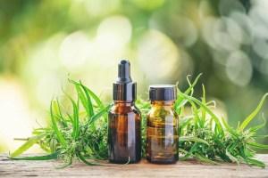 cannabis-with-cannabidiol-cbd-extract