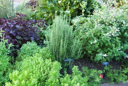 Image result for herb garden