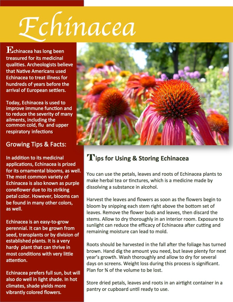 Tips for growing, using and preserving echinacea. Herb Gardening 101.