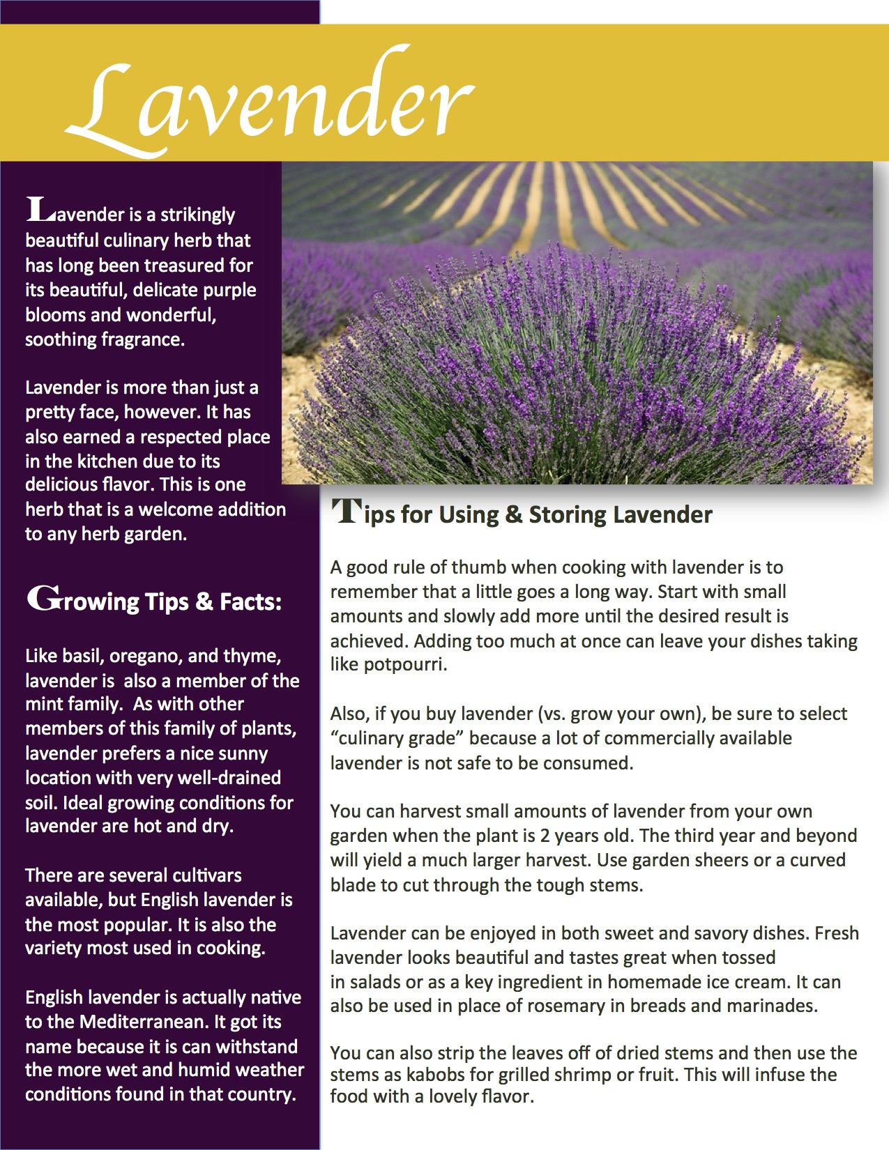 Herb Gardening 101: Growing Lavender