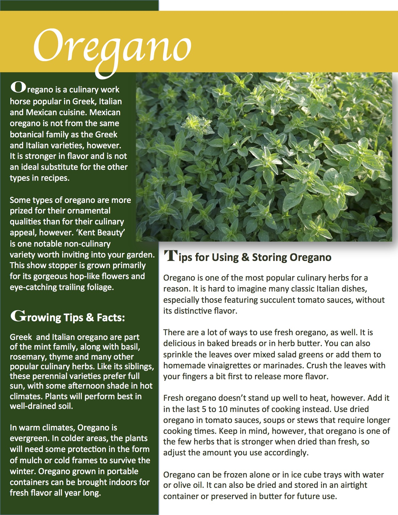 Herb Gardening 101: Growing Oregano