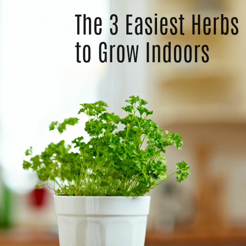 The 3 Easiest Herbs to Grow Indoors