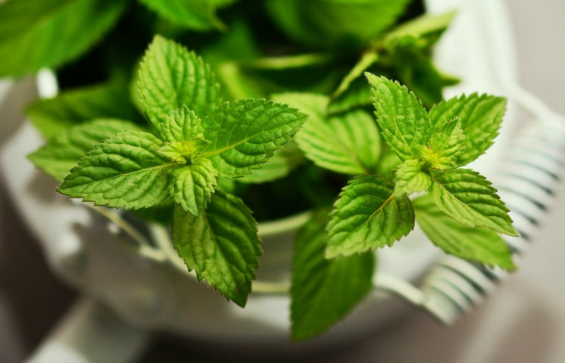 Top 3 herbs to grow indoors. Mint is an easy herb to grow indoors - just be sure to give it its own container!