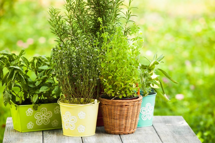 8 reasons to grow your own herbs.
