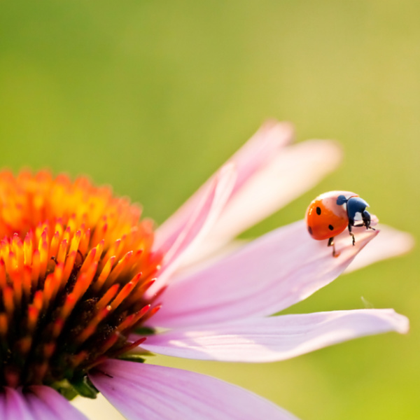5 Easy Ways to Attract Ladybugs to Your Garden
