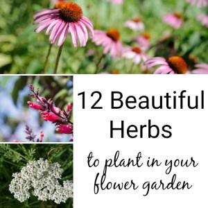 12 Beautiful Herbs for Flower Gardens