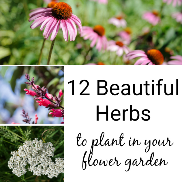 12 Beautiful Herbs for Flower Gardens