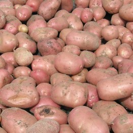 Red_Potatoes