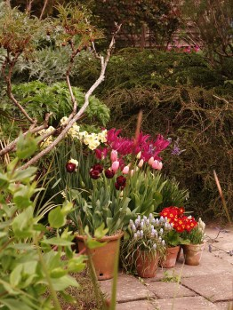 Large pot groups are used throughout the gardens to ensure there is always something fresh.