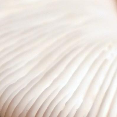 fungi-texture-2