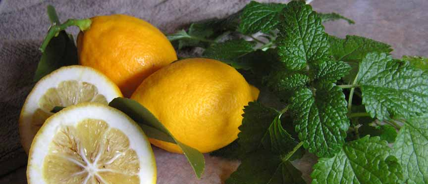 Lemon Balm for Luscious Flavor