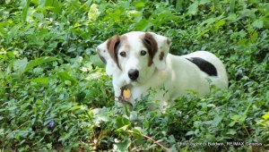 My boy dog Quincy