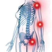 Categoria_Articulaciones-Huesos-Musculos