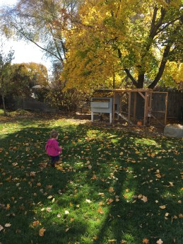 Fall Leaves Chicken Coop