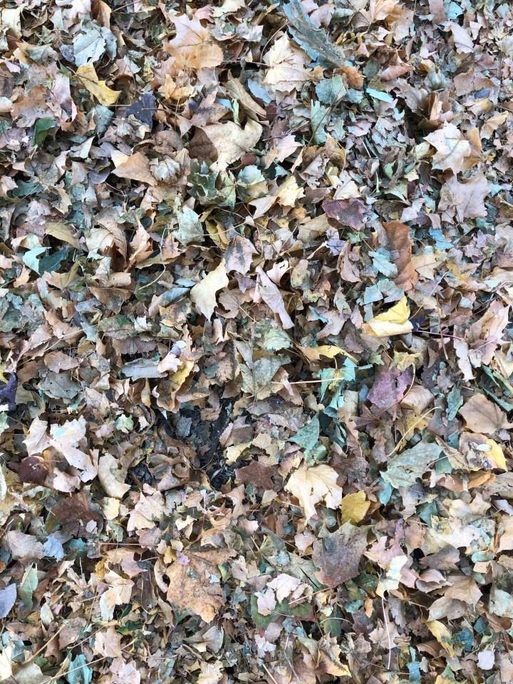 Beautiful shredded leaves- pre soaking.