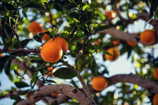 The Orange benefits