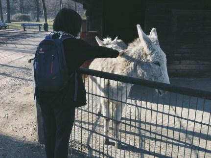 I like donkeys.