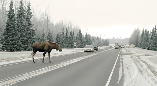 wildlife-on-highway