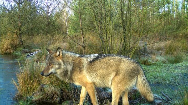 EWS - Wildlife -00653_.jpg