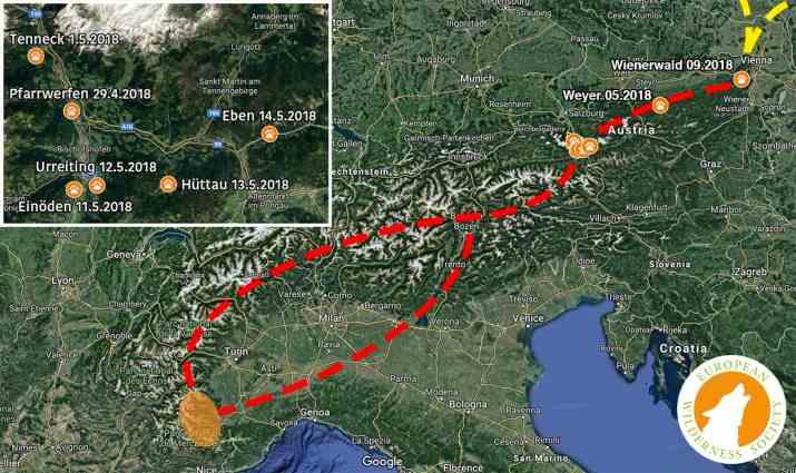 Wolf Route Salzburg 2018