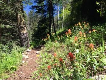 NM. Manzanita Trail