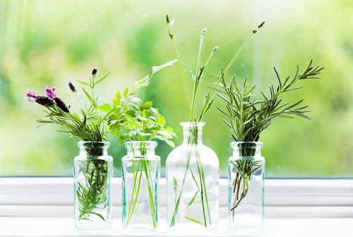 herbs.jars