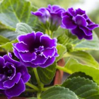 12 Top Flowering Houseplants for Easy-Care Blooms Indoors