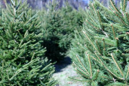chr tree close up