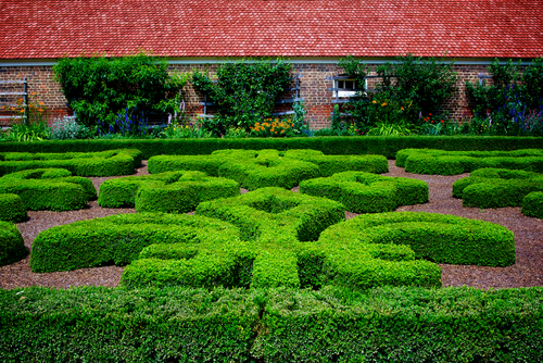 Boxwood parterre in fleur-de-lys pattern at Mount Vernon
