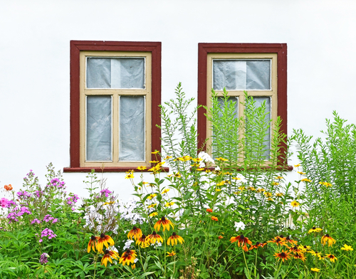 flowers under a window