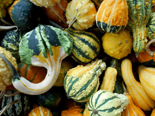 Ten Great Ideas For Decorating With Gourds