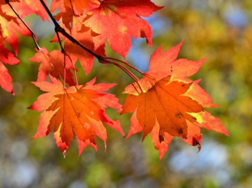 Why Leaves Change Color and Other Fun Fall Facts