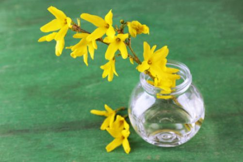 Forced early-spring blooms in a glass vase