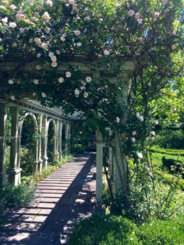 Pergola covered with roses at Mount Sharon/Photo: Here By Design