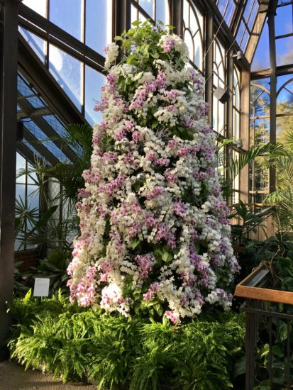 Orchid Christmas Tree.Longwood Gardens 10 Best Christmas Trees Of 2017 Here By