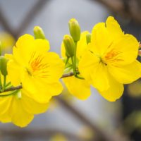 Vietnamese Tet: The Top Lucky Plants And Flowers