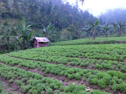 plantation in Indonesia