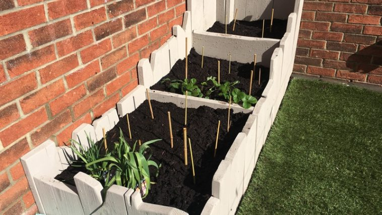 Vegetable Patch by Beginners